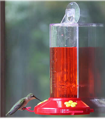 Window Mount Feeder