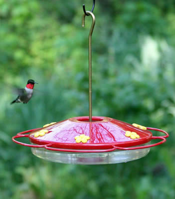 Hummingbird Oasis Feeder
