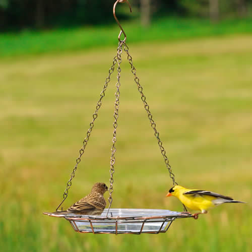 Wire Basket Bird Bath