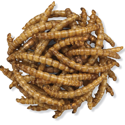 Roasted Mealworms - 2800