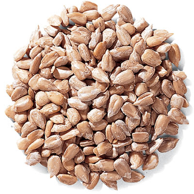 Duncraft Whole Sunflower Hearts Bird Seed