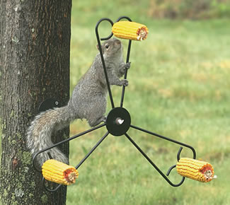 Squirrel Spinner Package