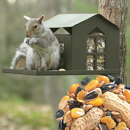 Metal Squirrel Feeder and Bird Seed Package