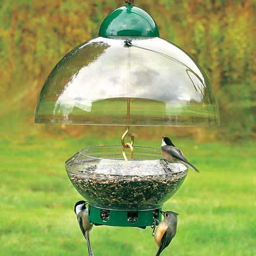 Droll Yankees Big Top Squirrel Proof Feeder