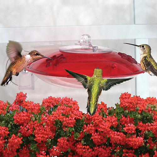 Droll Yankees Easy View Hummingbird Feeder