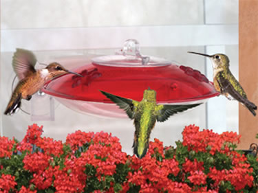 Easy View Hummingbird Feeder