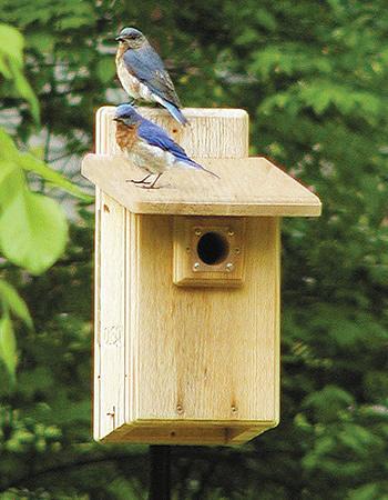 Duncraft Com Birdschoice Ultimate Bluebird House