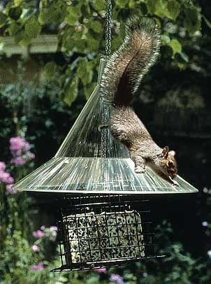 Squirrel Away Hanging Baffle