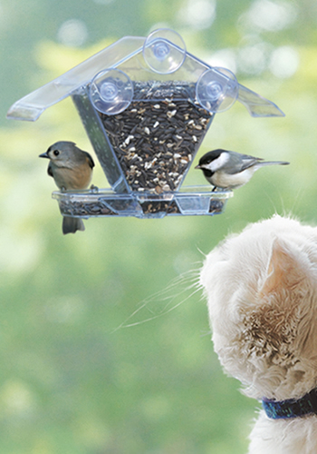 Window Cafe Feeder