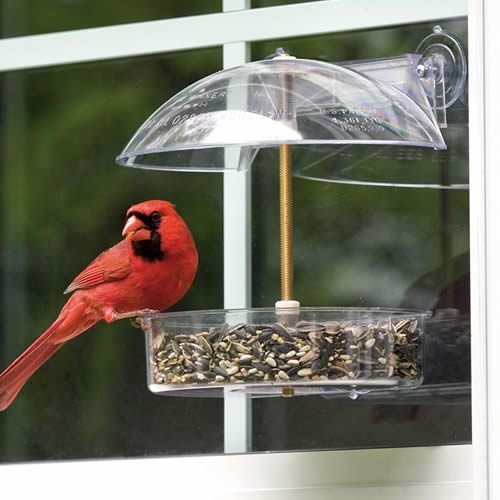 Droll Yankees Winner Window Feeder