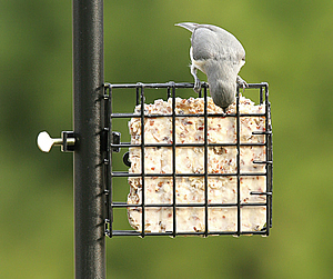 Pole Mount Suet Feeder