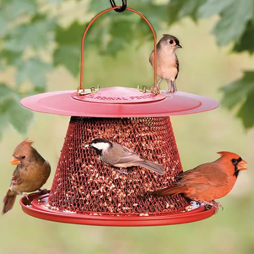Cardinal No/No Feeder