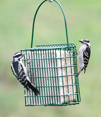 EZ Fill Suet Block Feeding Basket