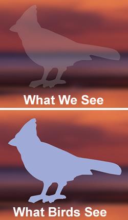 Duncraftcom Duncraft Bird Safe Cardinal Window Strike Decals - Window decals for birds