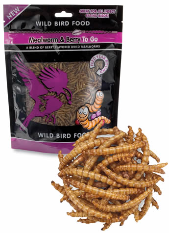 Meal Worms To Go Berry