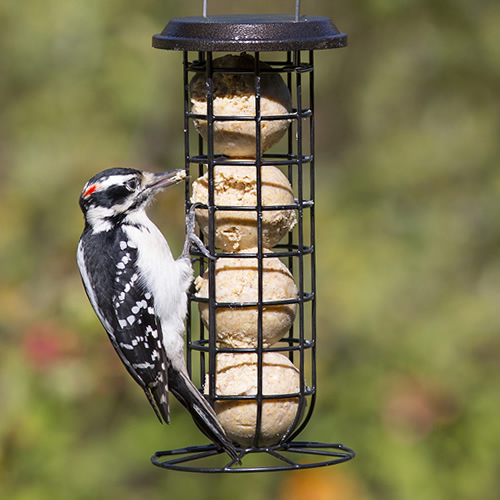 clinger suet seed feeder clinger suet amp seed feeder 908