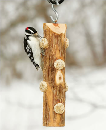 Rustic Suet Log Feeder