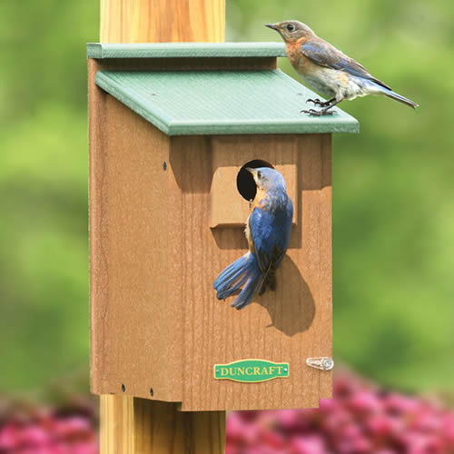 Eco-Friendly Bluebird House