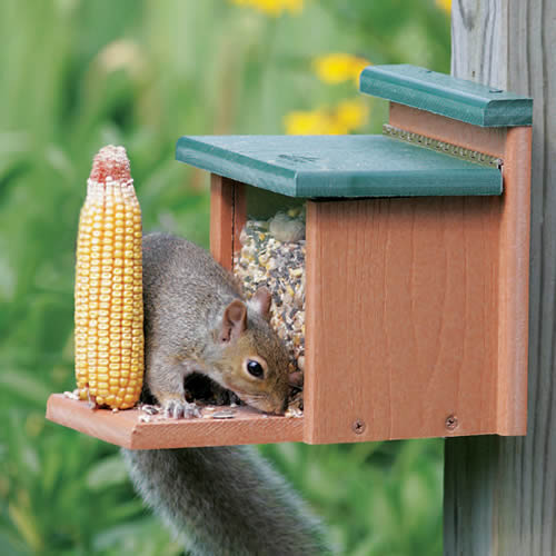 Recycled Squirrel Munch Box