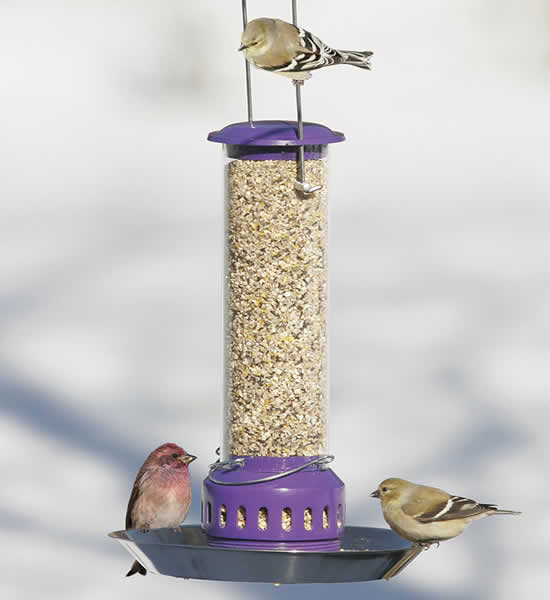 All Food Bird Feeder