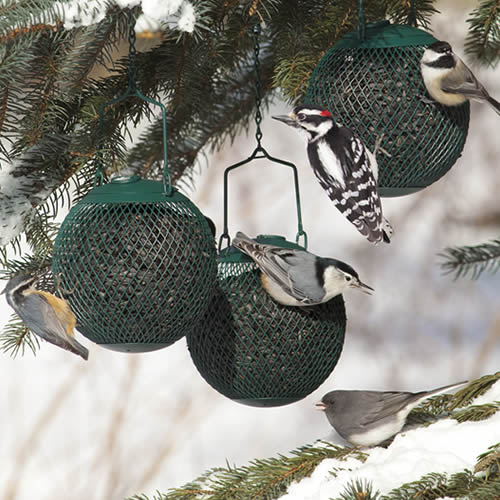 Green Seed Ball - Set of 3