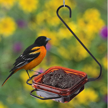 Hanging Oriole Dish Feeder