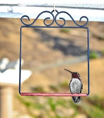 Pop's Hummingbird Swing Black