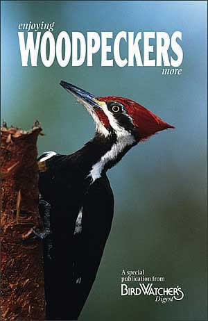 Enjoying Woodpeckers More