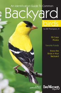 Guide to Common Backyard Birds