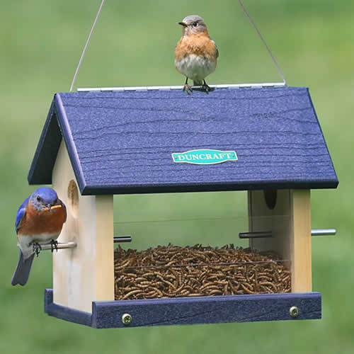 Eco Strong Bluebird Feeder