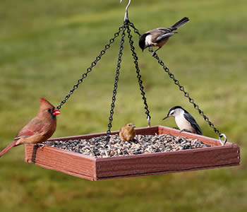 Eco Friendly Platform Feeder