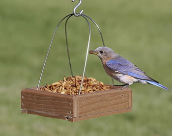 Hanging Mini Buffet Feeder