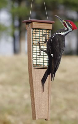 Eco Strong Tail Prop Suet Feeder
