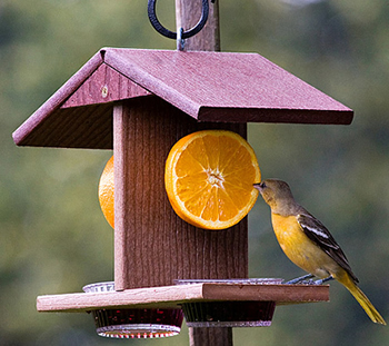 Eco-Strong Oriole Fruit Feeder