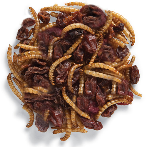 Roasted Mealworm & Cranberry