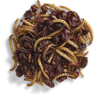 Roasted Mealworms & Cranberries