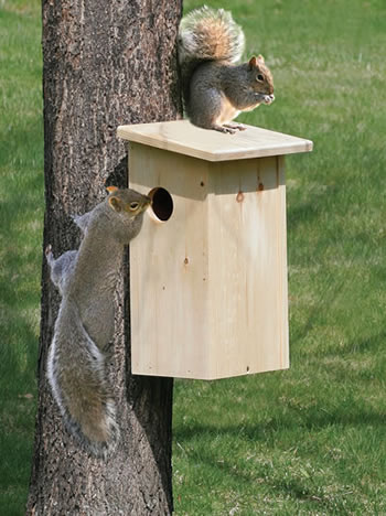 Duncraft Squirrel House