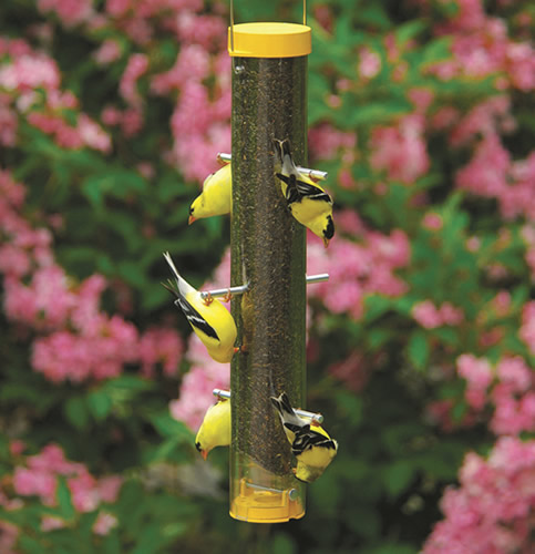 Bottoms Up Finch Feeders