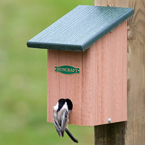 Eco-Songbird Roosting Box