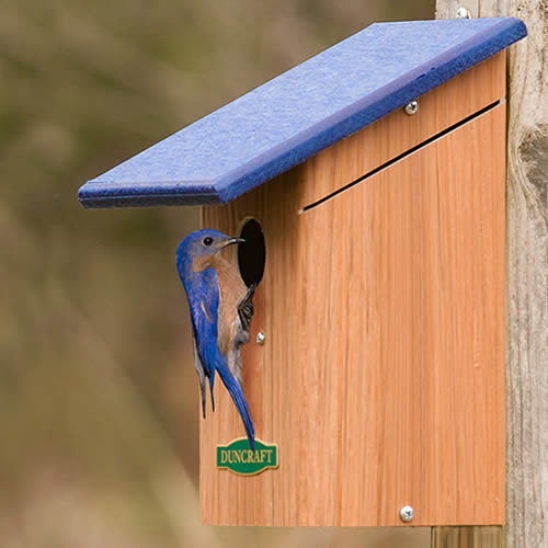 Bird-Safe' Bluebird House