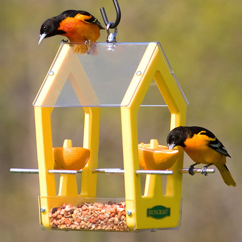 Eco Strong Fruit Feeder