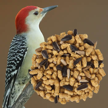Nutri Bits Seed Sensation