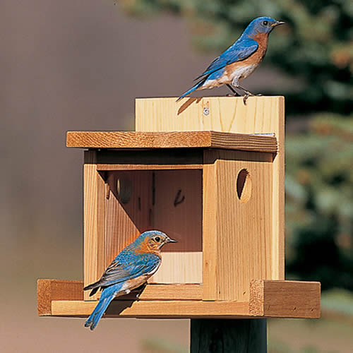 Duncraft Bluebird Post Feeder