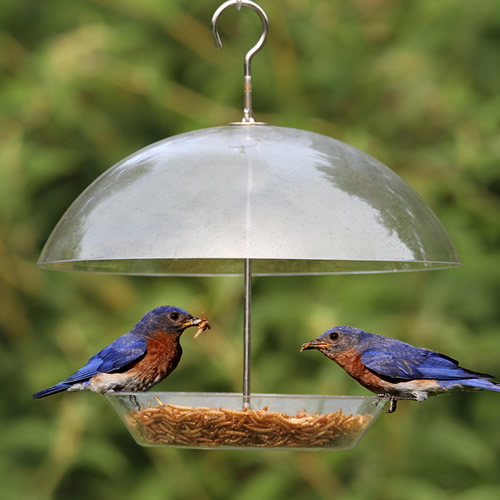 Dome Top Bluebird Feeder