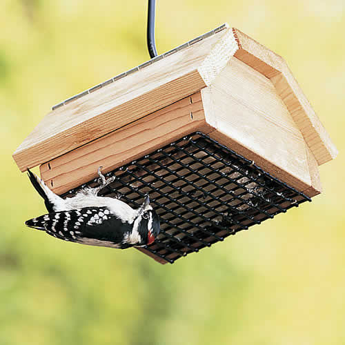 Duncraft Upside Down Suet