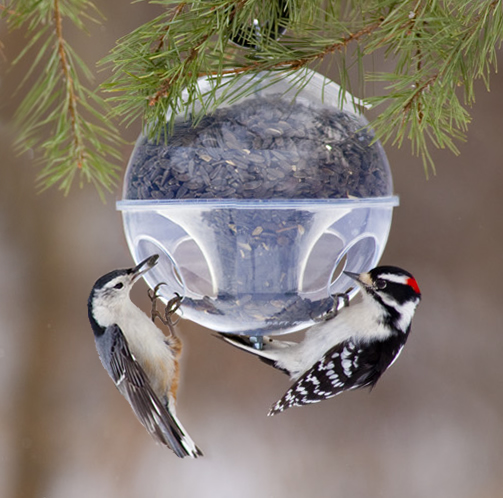 Birders Flock to Duncraft for Bird Food and Feeders