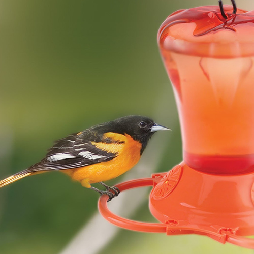 Oriole Nectar Feeder