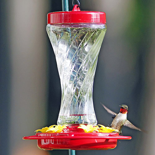 Paradise Hummingbird Feeder