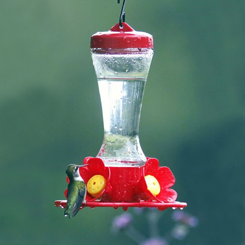 Impatiens Hummingbird Feeder