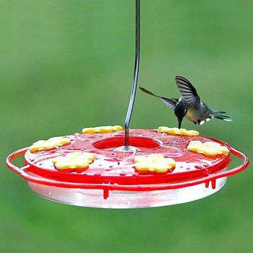 Saucer Style Hummingbird Feeder